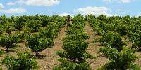 Camino de viñas!