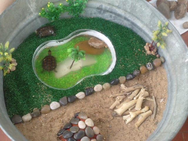 el paraiso de las tortugas de elena