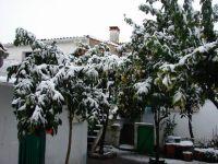 Naranjos nevados