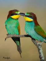 Una pareja multicolor.
