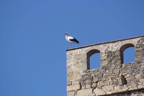 cigüeña de la torre del castillo