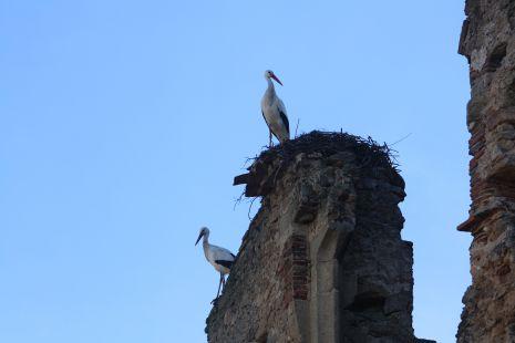 cigüeñas vigilando