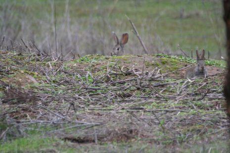 conejos jugando