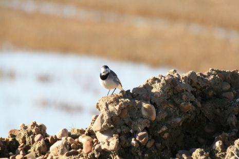 vista de pájaro