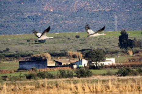 volando sobre el cortijo