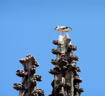 Catedral y zancuda