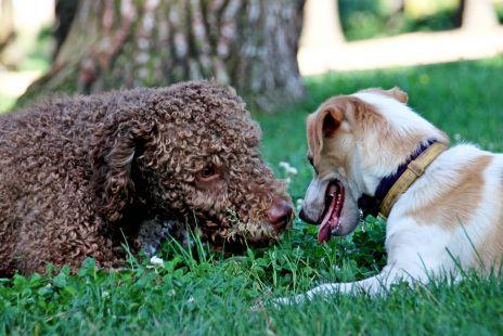 Kurko haciendo amigos