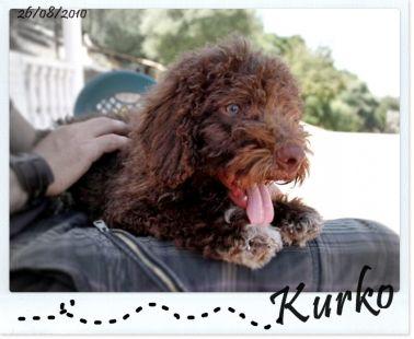 Kurko con 2 meses