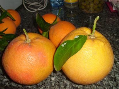 Pomelos y naranjas