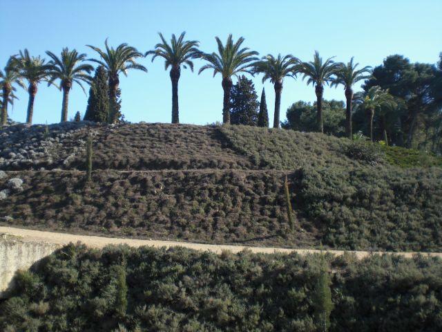 palmeras del Castillo