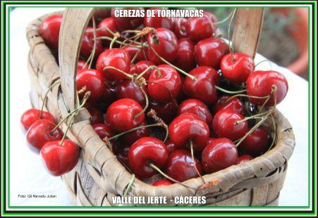 Cerezas de Tornavacas